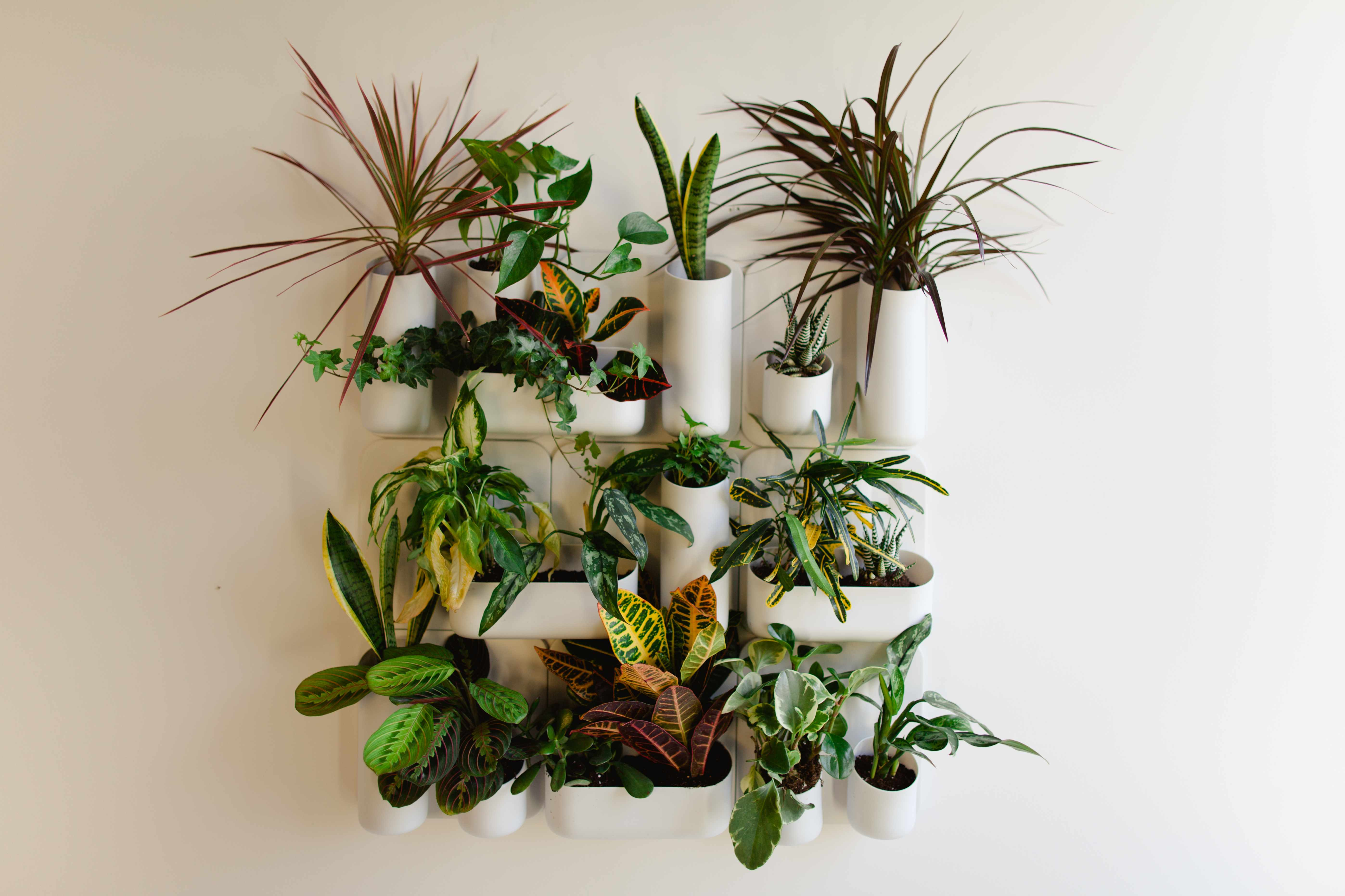 A Vertical Indoor Wall Garden BEFORE AFTER by Judith Mackin